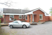 Bungalow for sale in Bromham Road, Biddenham...