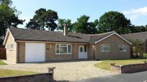 Detached Bungalow to rent in Meadow Drive, Lakenheath...