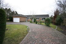 Detached Bungalow in Collingwood Crescent...