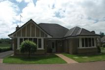 Detached Bungalow to rent in Byretown Grove...