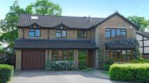 5 bedroom Detached house to rent in South Grove