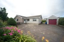 3 bed Detached Bungalow to rent in Bridesmill Road...