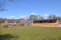 3 bed Equestrian Facility house in Goose Green, Pulborough...