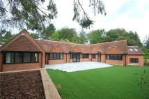 5 bed Bungalow in Gold Hill East...