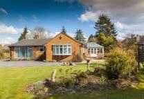3 bed Detached Bungalow to rent in Lloyd Road, Tettenhall...