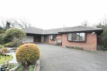 Detached Bungalow for sale in Shaftesbury Close...