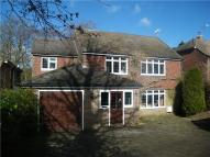 Detached property to rent in Ghyll Road, Crowborough...