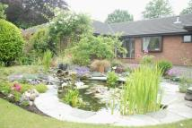 3 bed Detached Bungalow for sale in Shaftesbury Close...