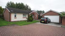 Detached Bungalow for sale in Hawkshaw Close...