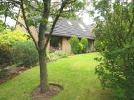 Bungalow for sale in Drawbriggs Mount...
