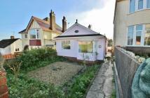 Detached Bungalow to rent in Hill Road, Lyme Regis DT7