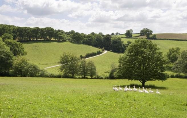Stunning Countryside