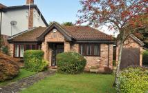 Semi-Detached Bungalow in Briarlands Close...