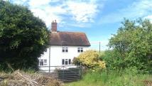 Winterborne Stickland Cottage to rent