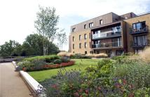 new Flat to rent in Conningham Court...