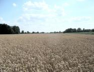 property for sale in Land to West of, Ely Road, Soham, Ely, Cambridgeshire, CB7 5XF