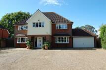 Detached house for sale in Martlesham, IP12