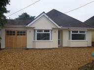 Detached Bungalow to rent in Hampton Drive, Poulner...