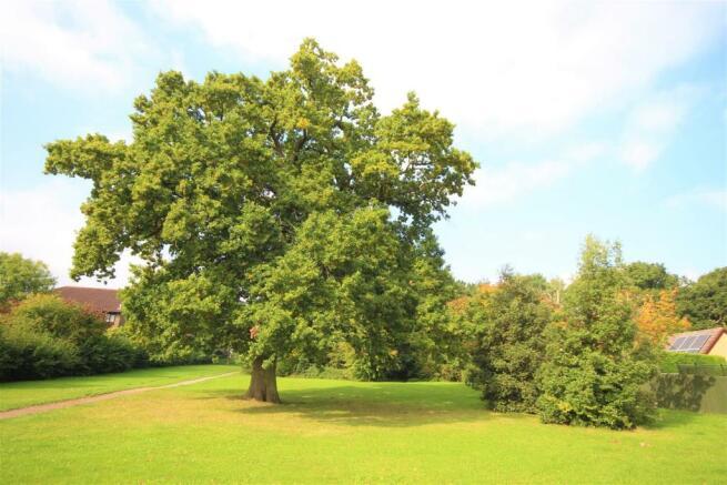 Broad Hinton Woodlands