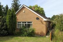 Detached Bungalow to rent in Old Main Road, Fleet...