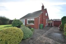 3 bed Detached Bungalow in Sycamore Drive...