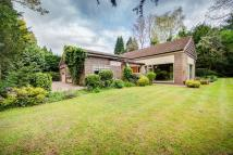 Brancepeth Detached Bungalow to rent