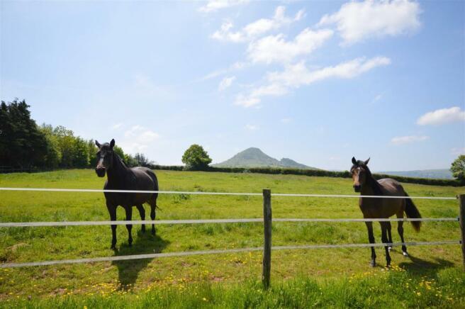 Horses and Skirrid.JPG