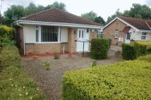 Detached Bungalow for sale in Hanbury Close...