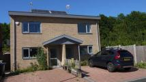 2 bed new property to rent in Buttercup Grove, Ratby