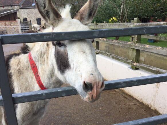 Sidmouth Donkey
