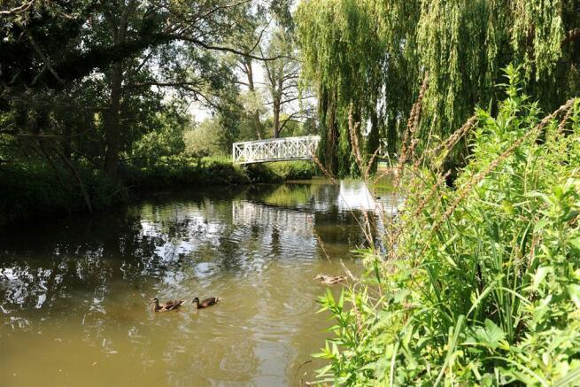 river ducks