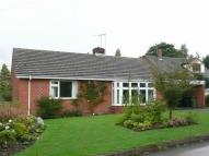 Detached Bungalow to rent in Ashworthy, Park Drive...