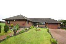Detached Bungalow in Gillview, Horsely Head...
