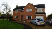 4 bed Detached house in Hallcyon, Grove Road...