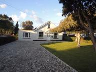 Detached Bungalow to rent in Rectory Road, Rowhedge...