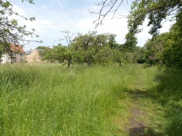 Wild Meadow Walks