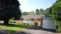 Detached Bungalow in Yockley Close, Camberley