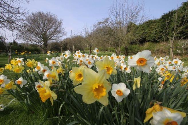 The daffs