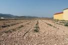 Land for sale in Jumilla, Murcia, Spain
