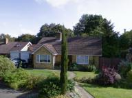 3 bed Detached Bungalow to rent in Humboldt Court...