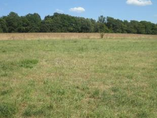 Hectare with field