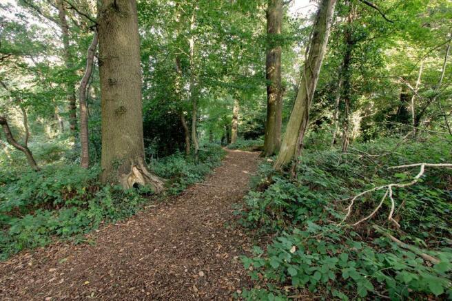 Woodland At Rear