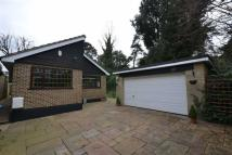Detached Bungalow for sale in Eversley Mount...