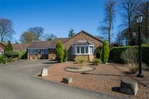Detached Bungalow in Beech Rise, Paull...