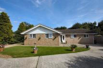 3 bedroom Detached Bungalow in Bumpstead Road, Haverhill
