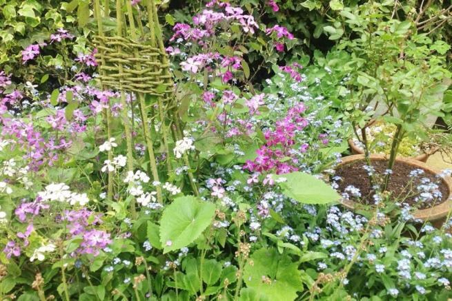 garden in the summer