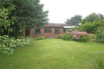 Detached Bungalow for sale in Plains Road, Mapperley...