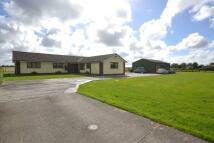 4 bedroom Detached Bungalow in Fermor Road...