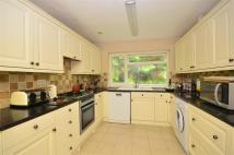 Bungalow for sale in Wayland Avenue, Brighton...
