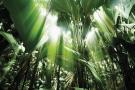 Zil Pasyon - Jungle trail